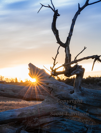 Dead Tree at Sunrise in Fort Collins Open Area